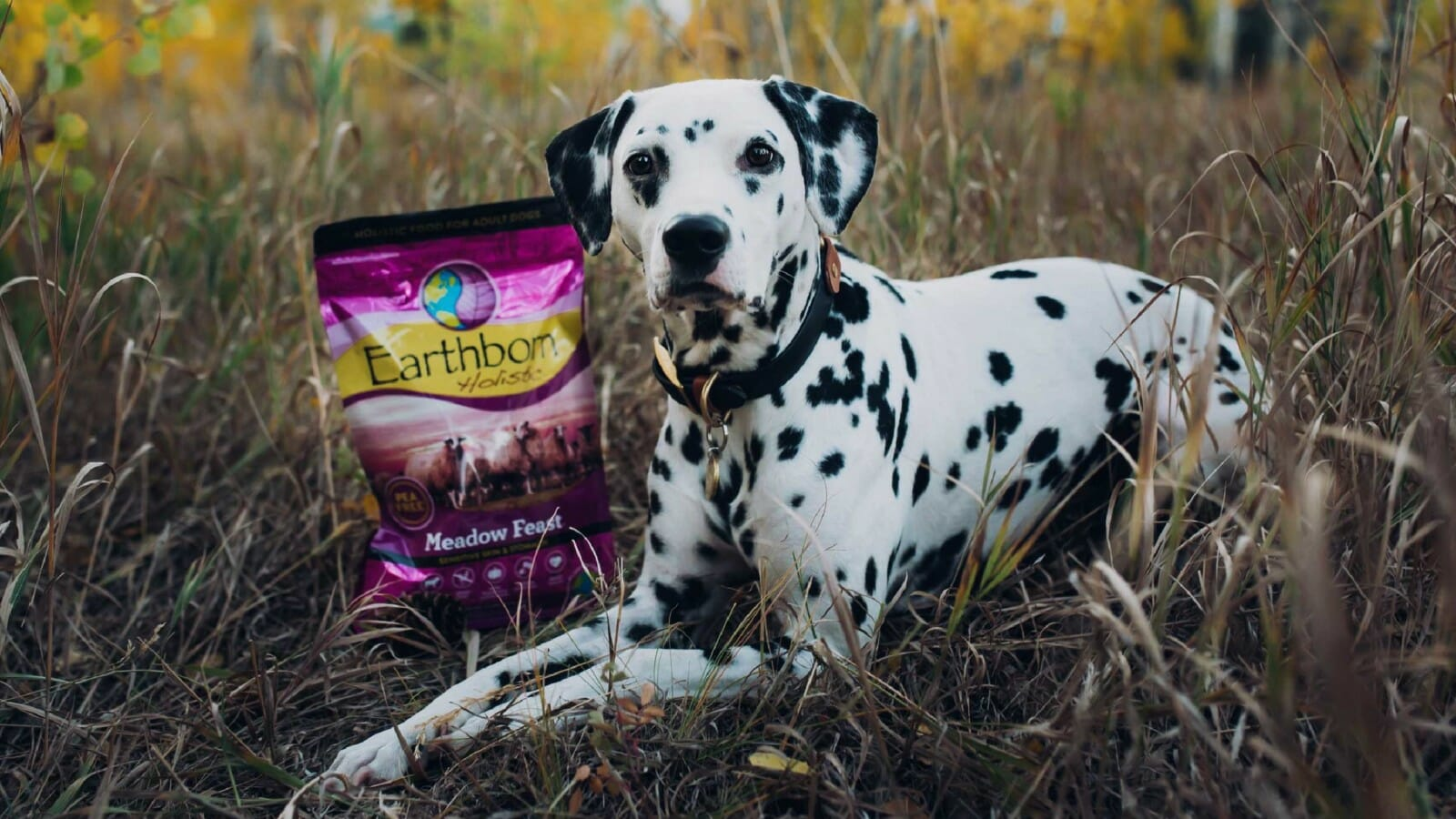 A dog lays next to a bag of Earthborn Holistic Meadow Feast