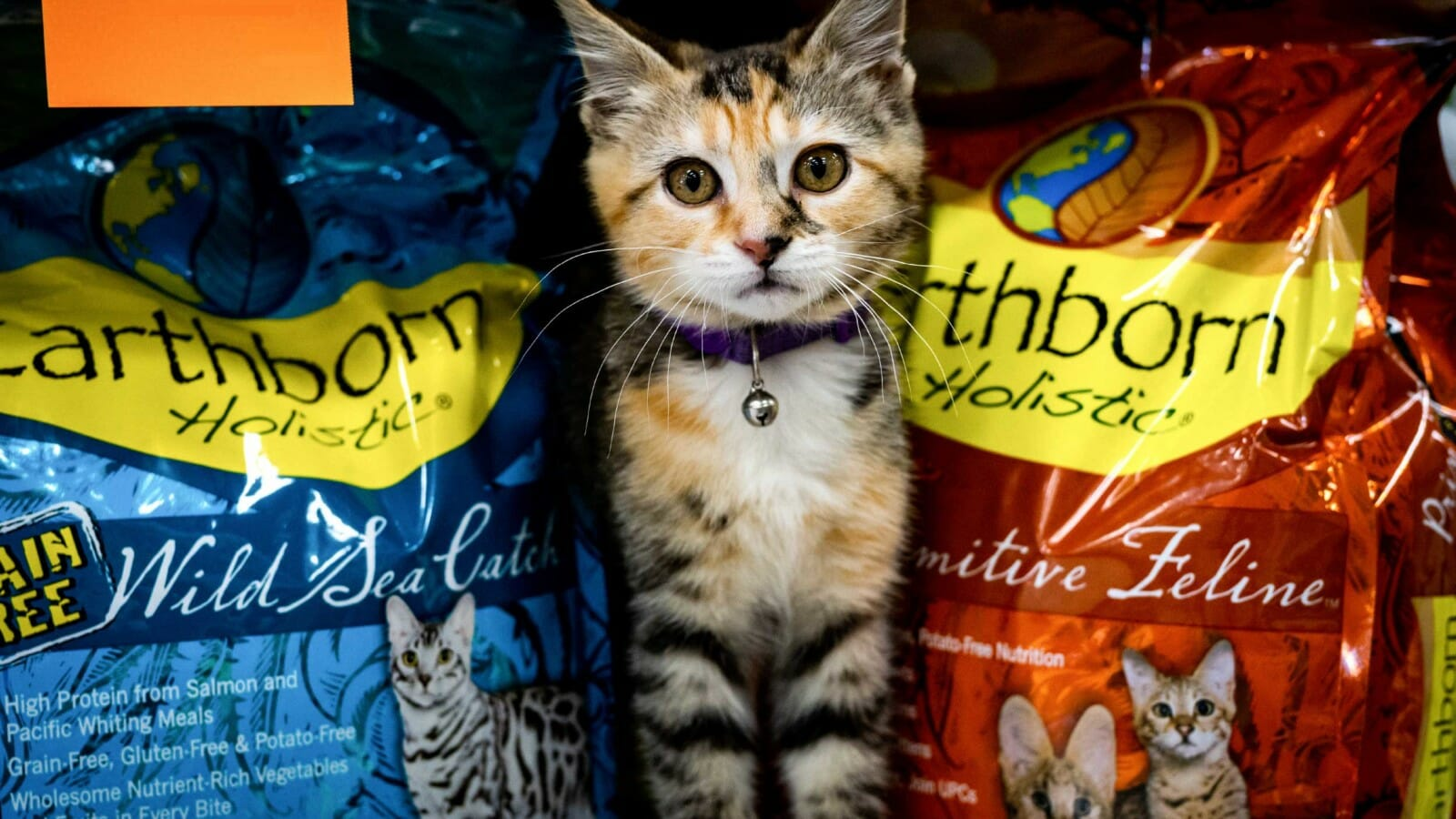 A kitten sits between two cat food bags