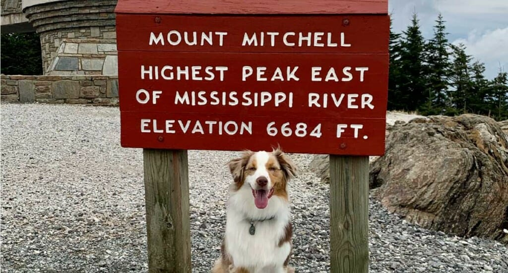 A dog sits in front of the sign for Mount Mitchell in Asheville, NC