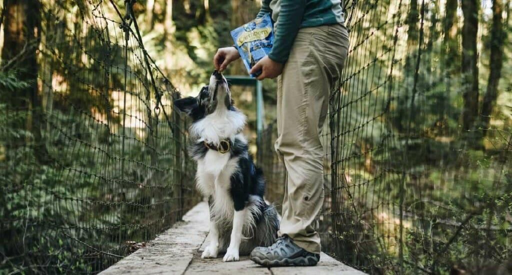 A dog owner feeds their dog EarthBites Skin & Coat treats