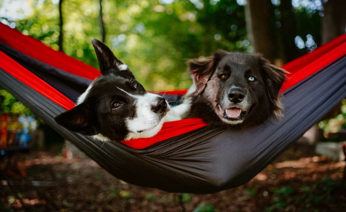 Two dogs laying in a hammock