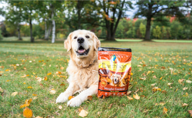 Your Guide to Weight Management Dog Food