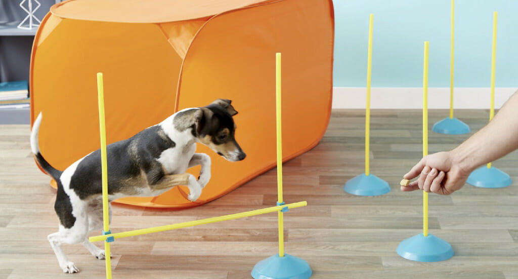 A dog jumps over a high jump from an indoor agility kit