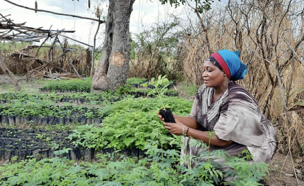 Forest Garden Farmer Testimonial: Salma Mussa