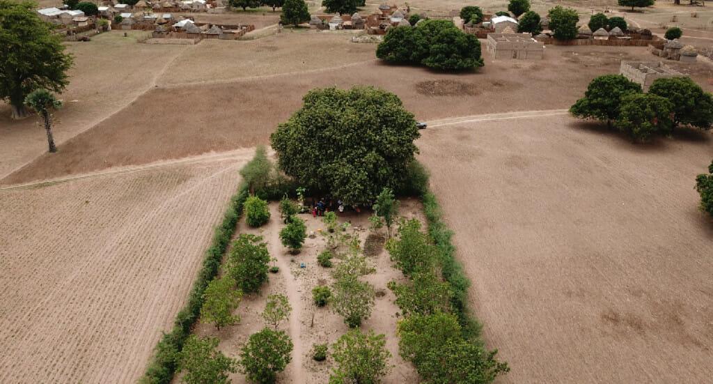 An aerial photo of a forest garden
