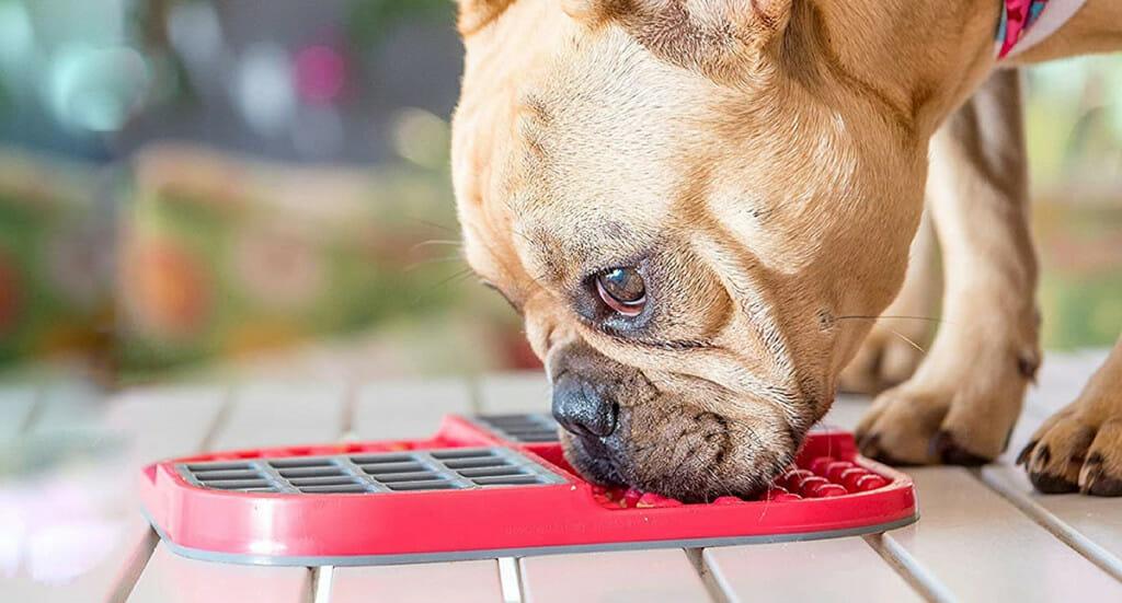 A dog licks food off of a Licki mat