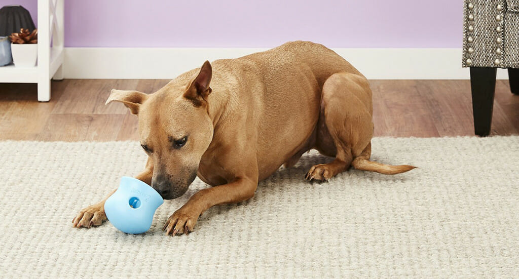 A dog plays with a West Paw Toppl dog toy