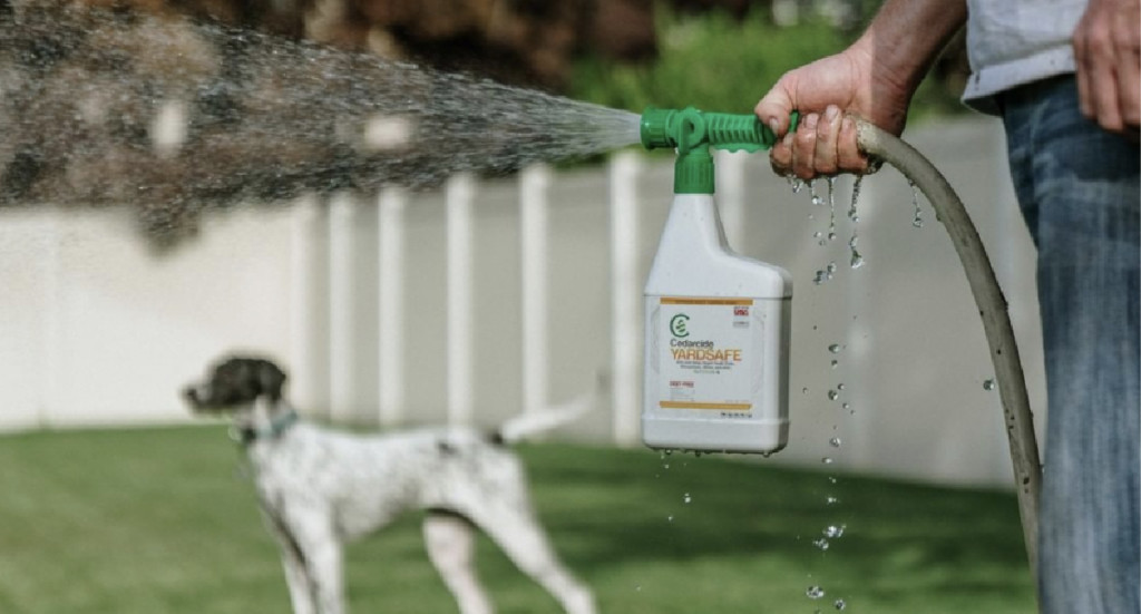 A human stands in their yard spraying Cedarcide Yardsafe with their dog in the background