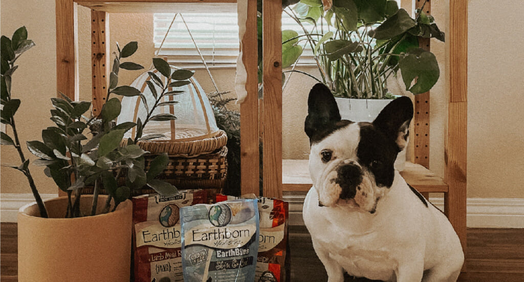 A dog stands in front of a variety of houseplants with some Earthborn Holistic dog treats