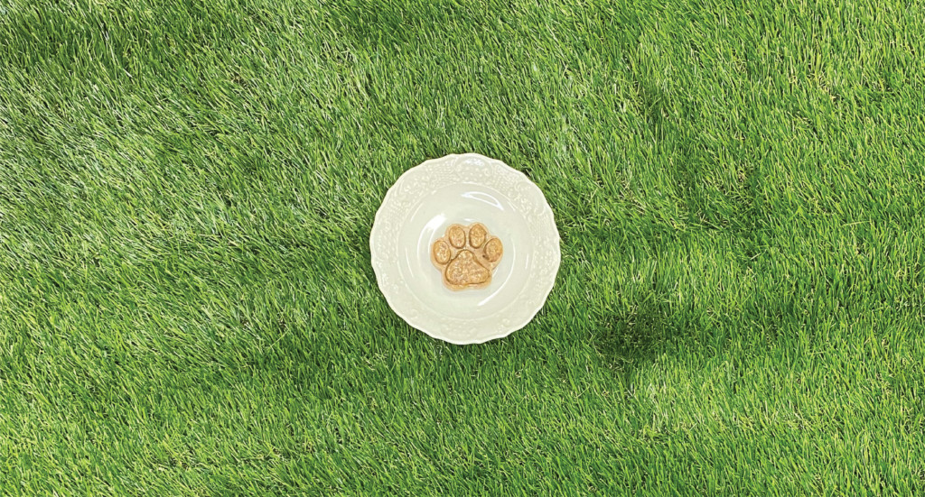 A frozen cat treat shaped like a paw on a plate