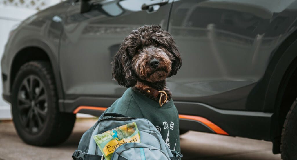 A dog sits in front of a vehicle next to a backpack filled with Earthborn Holistic treats