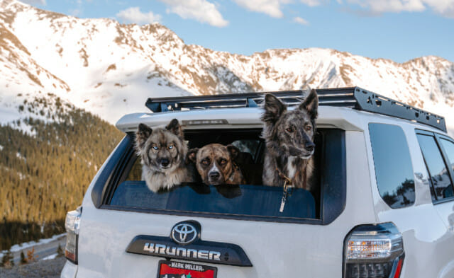 Road Tripping with Your Dog