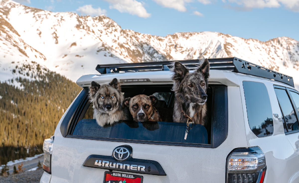 Three dogs stick their heads out the back window of an SUV parked in front of a mountain range