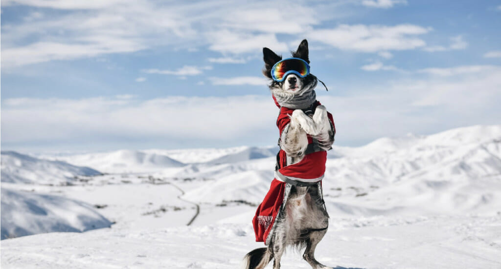 A dog stands in the snow on his hind legs wearing googles and a red Hurtta Extreme Warmer