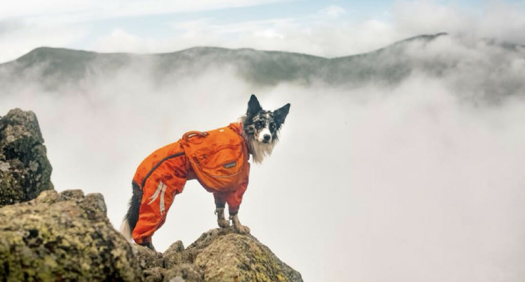 A dog stands on a foggy lookout point wearing a Hurtta Slush Combat Suit