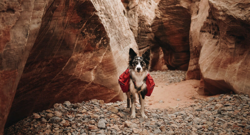 A dog stands in a canyon wearing a red Ruffwear Palisades backpack