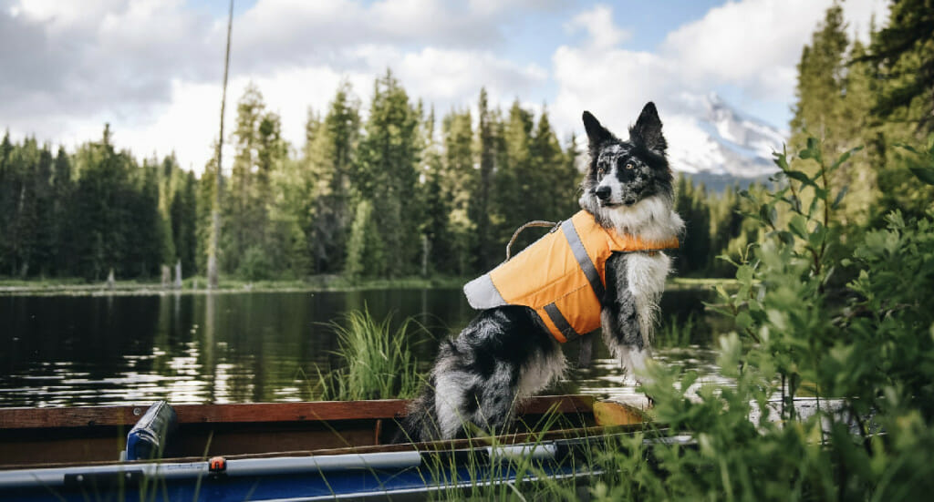 A dog stands on the edge of a boat wearing a Hurtta Life Savior life jacket