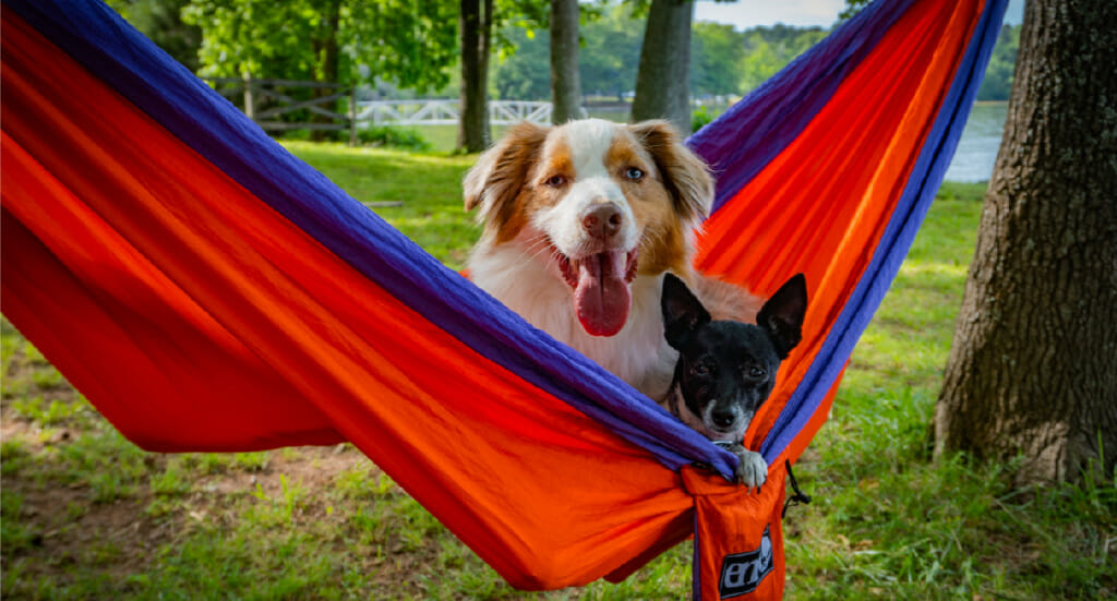 Two dogs lay together in a red hammock