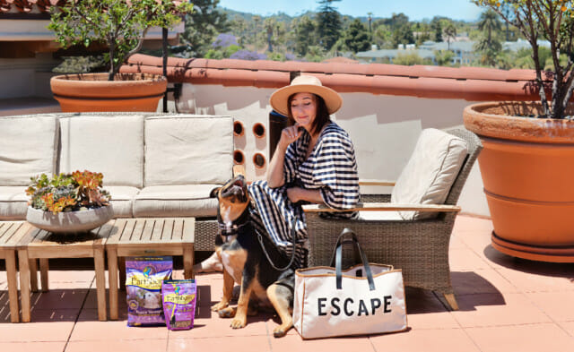 Summer Cleaning Tips & Safety for Your Pets