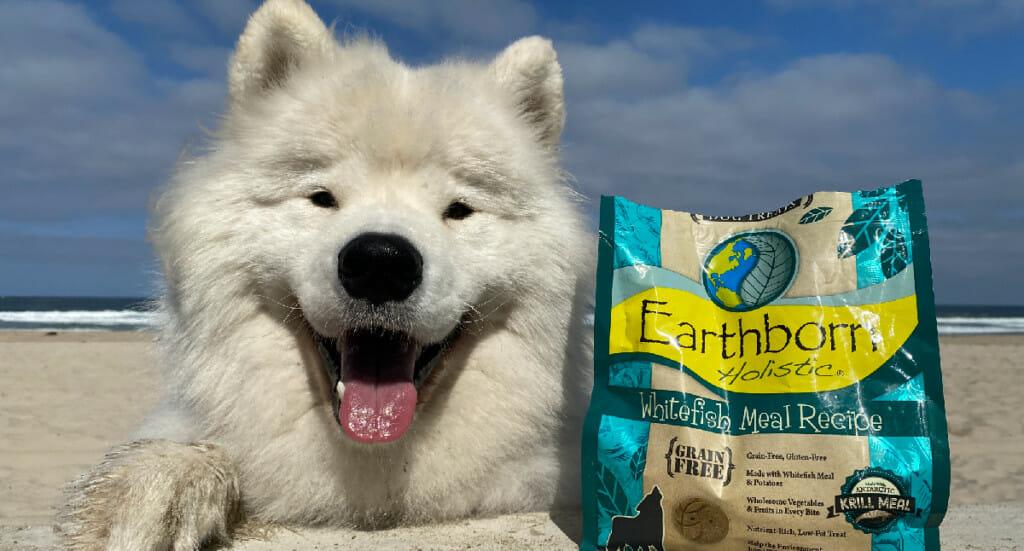 A dog lays on a beach next to a bag of Earthborn Holistic oven baked dog treats