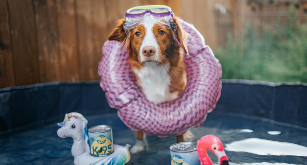 A dog wearing a floatie and swim goggles stands in a doggy pool surrounded by floating cans of Earthborn Holistic K95, in mini floaties