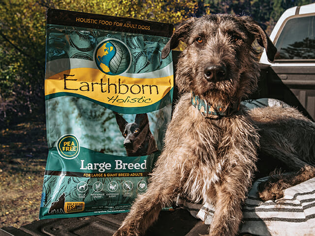An Irish Wolfhound sits next to a bag of Earthborn Holistic Large Breed dog food
