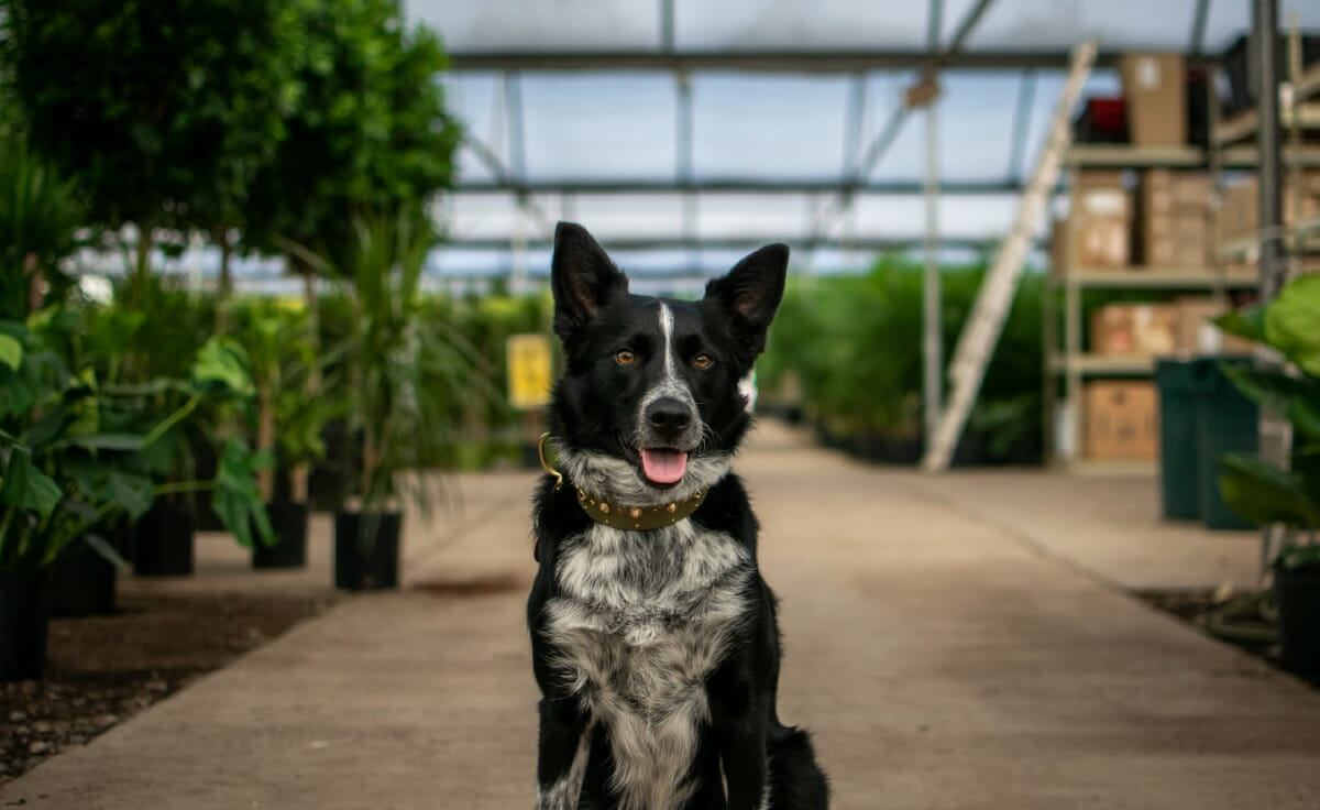 A dog sits in a walkway inside a greenhouse