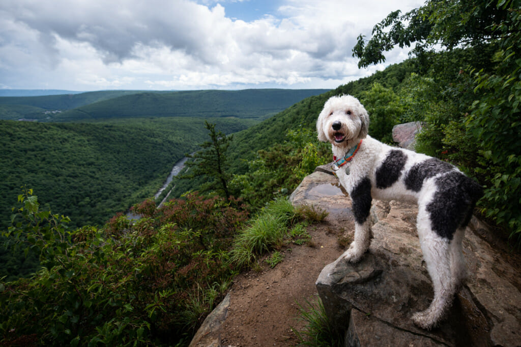 A dog stands on the edge of a pretty trail overlook