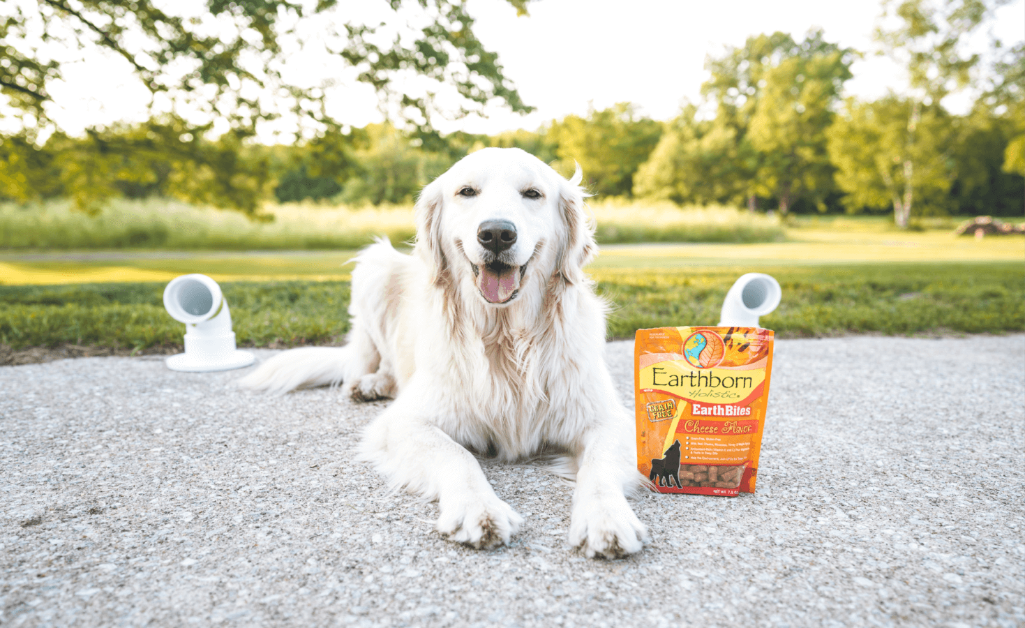 A golden retriever lays next to dog scent work items and EarthBites dog treats