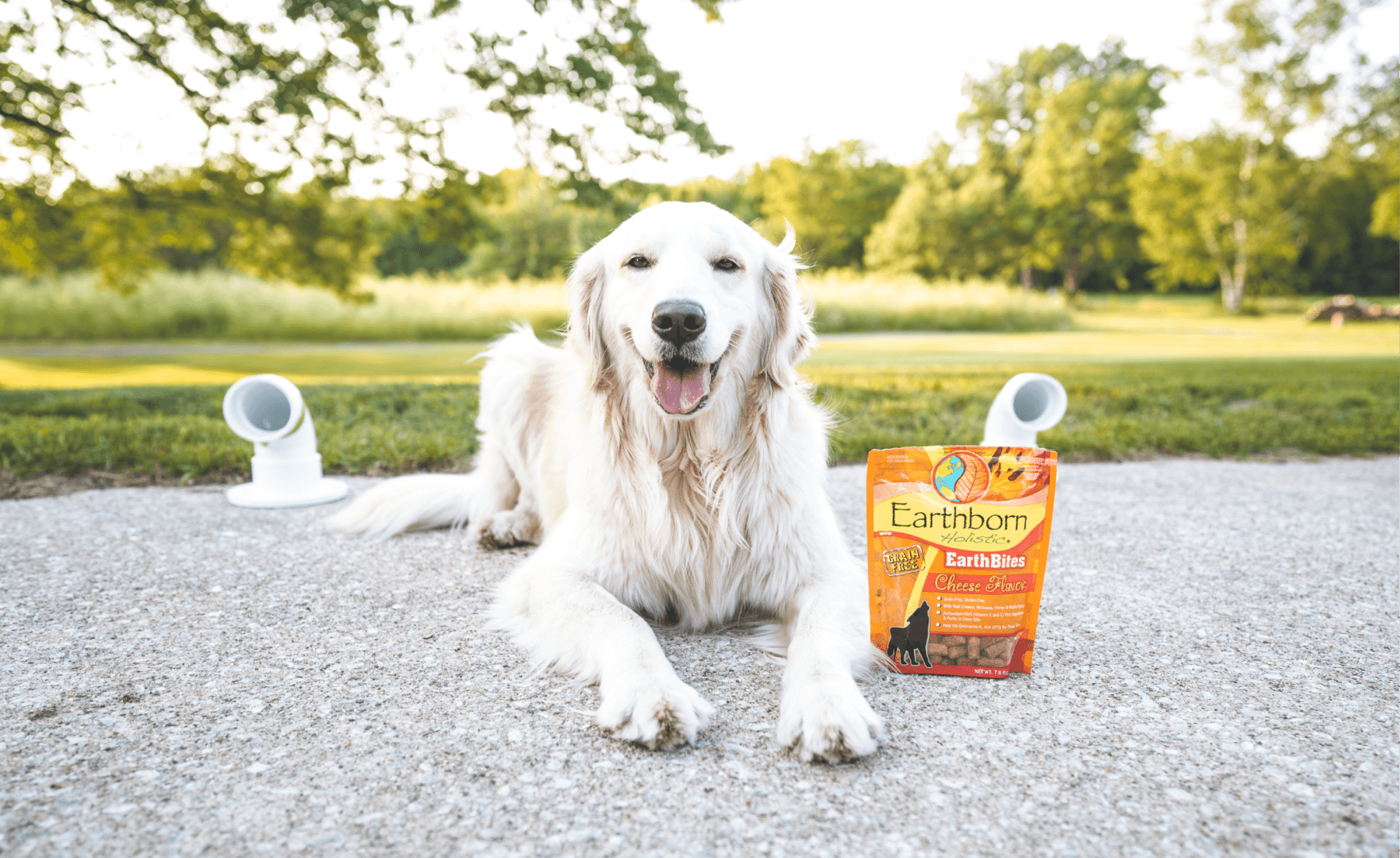 Sniff Happens – An Intro to Scent Work for Dogs