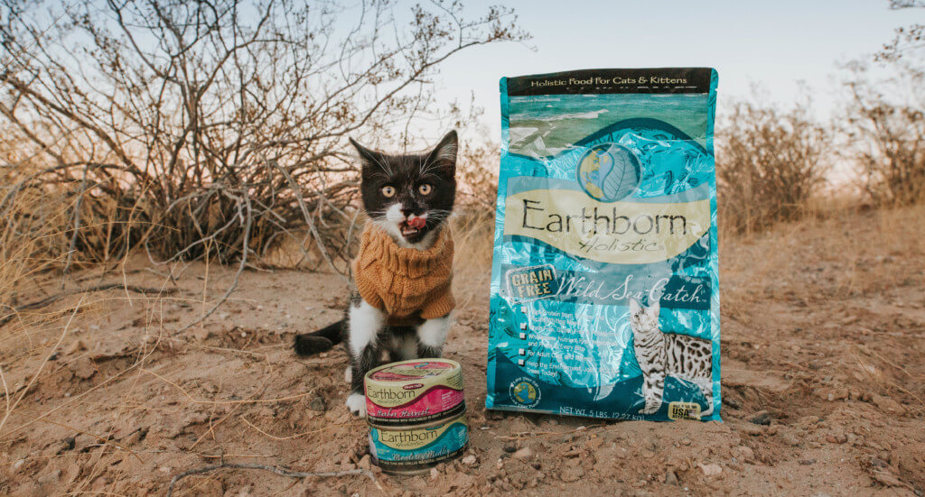 A small kitten stands next to a bag of Wild Sea Catch kitten food and two cans of Earthborn Holistic wet kitten food