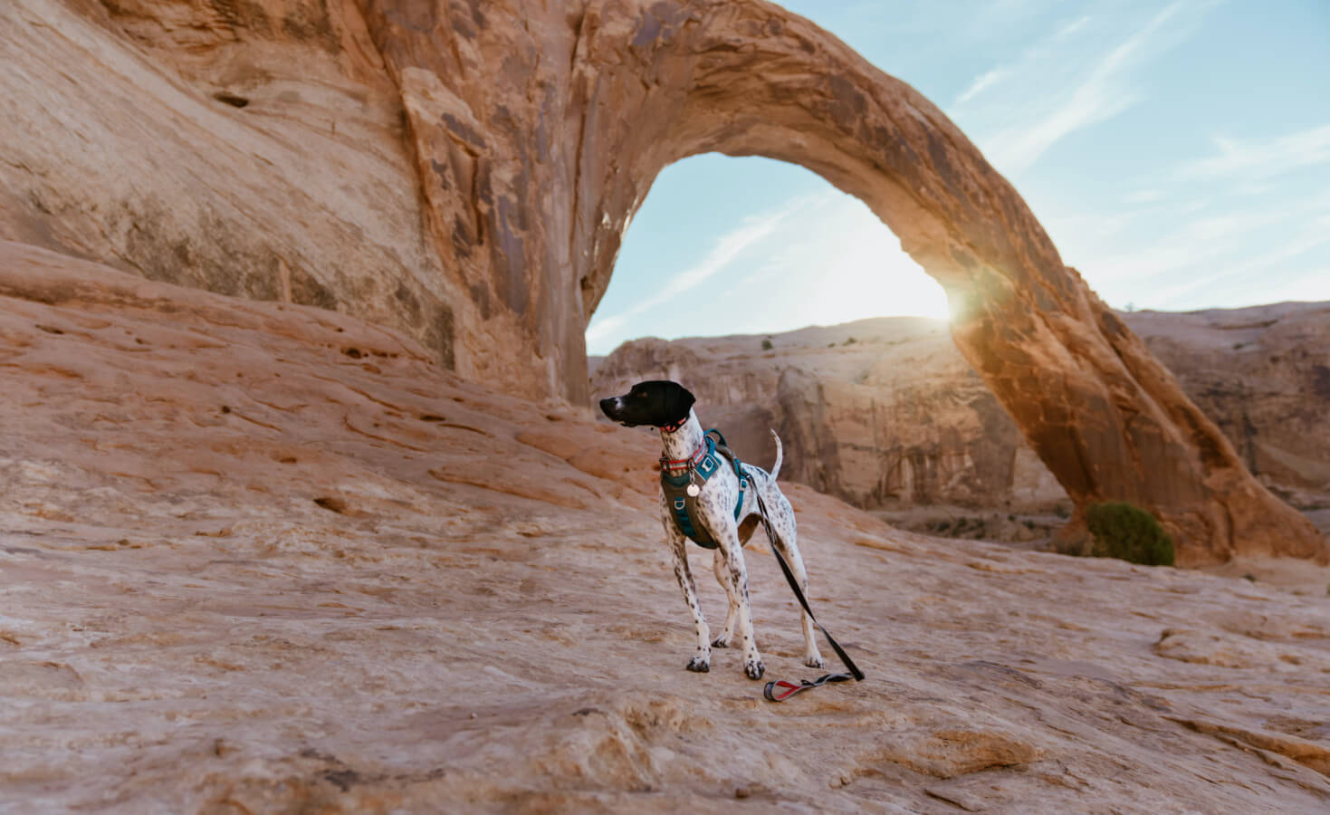 A dog stands in front of the Corona Arch in Utah