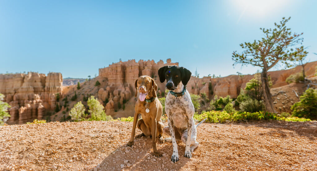 Two dogs sit in front of a view of Golden Wall to Castle Bridge in Utah