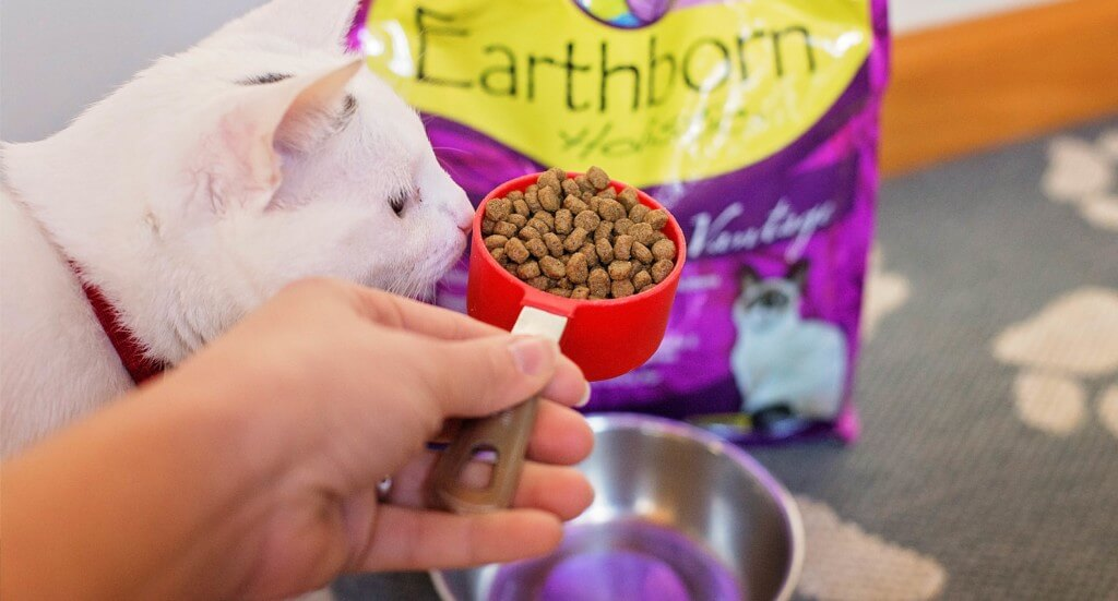 A cat sniffs a scoop of cat food about to be dumped into his bowl