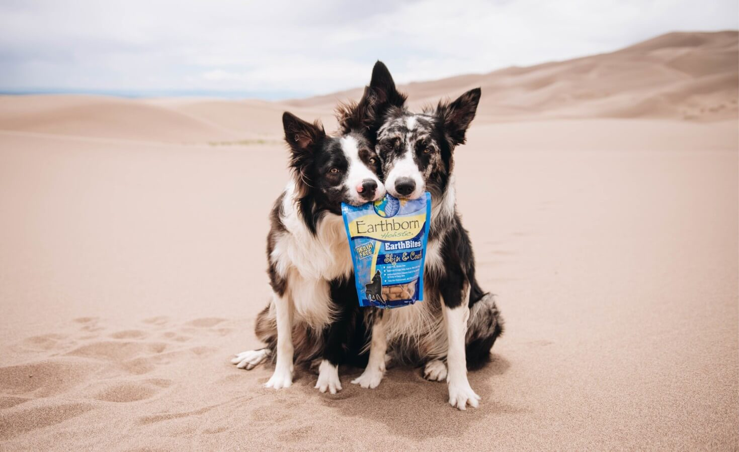 Two dogs sit together in the desert both holding a corner of a bag of dog treats