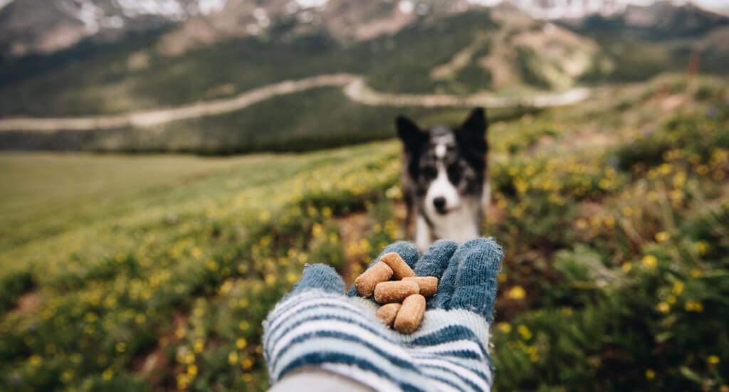 A hand full of dog treats reaches out towards a dog sitting in a grassy area