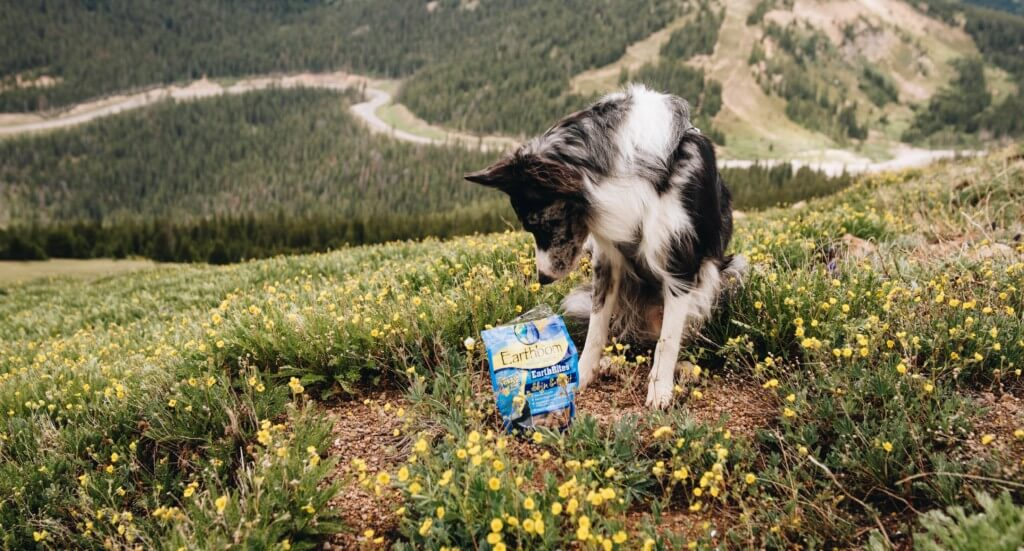 A dog sits in a grassy area sniffing a bag of treats that's next to him