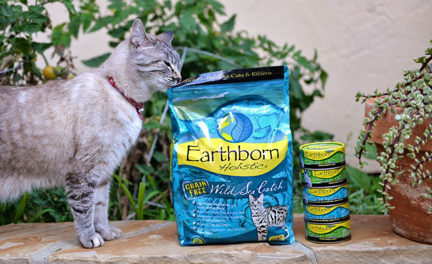 A cat sniffs the corner of an Earthborn Holistic cat food bag