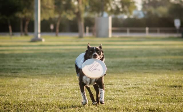 Building Your Dog's Toy Drive