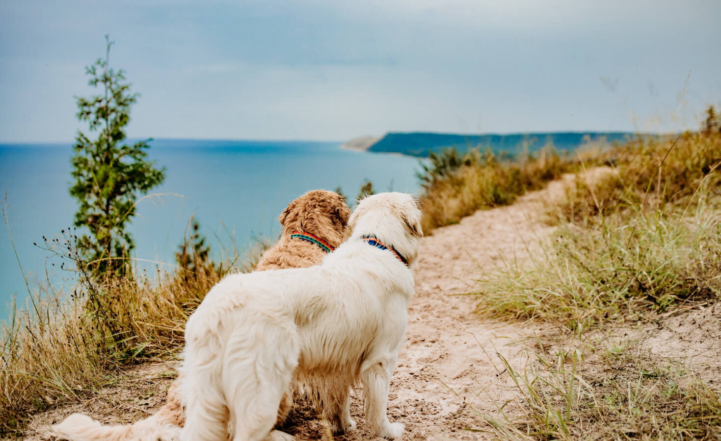 Two dogs stand on a trail overlooking one of the Great Lakes in Michigan