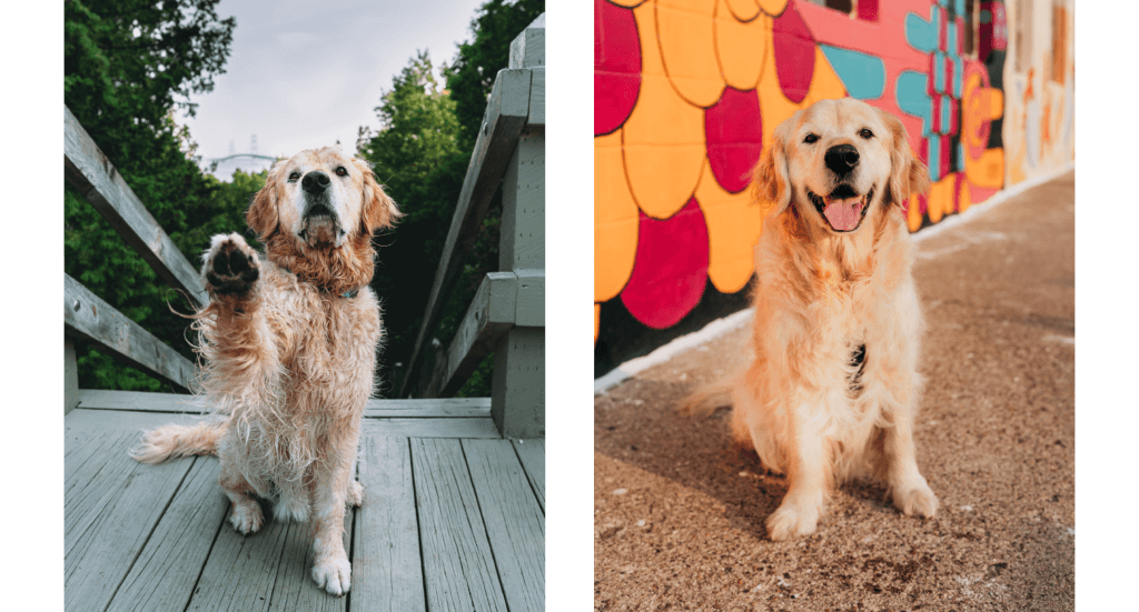 Two photos; A dog sitting at the Mackinac Bridge overlook and one of the dog in front of a pink and orange mural