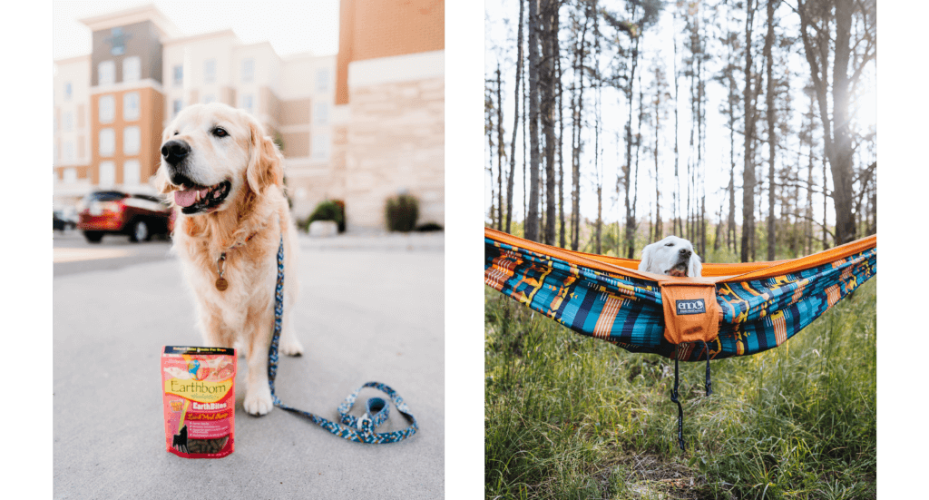 Two photos; one of a dog standing outside a hotel with a bag of dog treats and another of a dog laying in a hammock