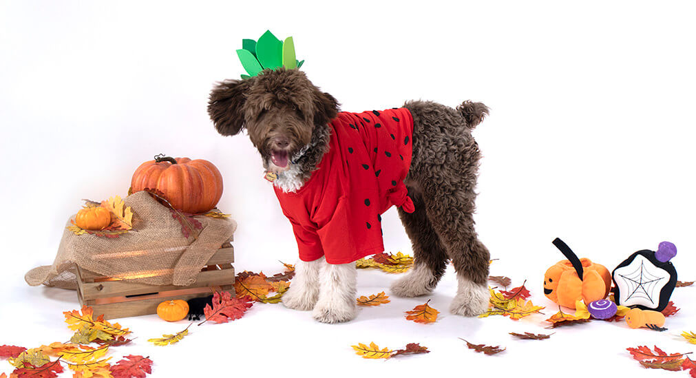 A dog wearing a strawberry Halloween costume