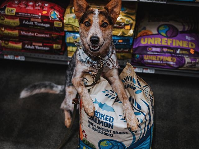 Dog over an Earthborn Holistic bag of food