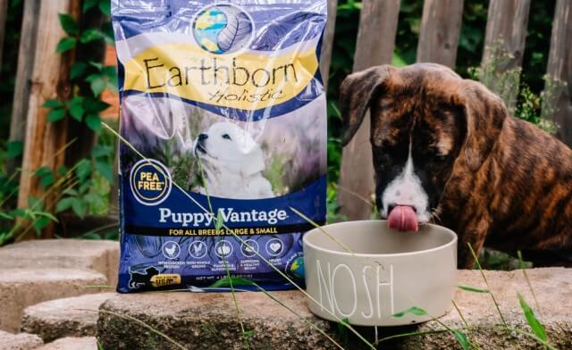 The Best Puppy Food for Your Growing Dog