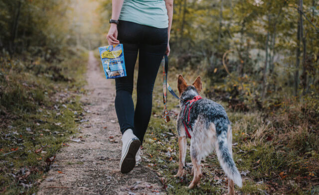 Dog Exercise Tips to Help with Weight Loss